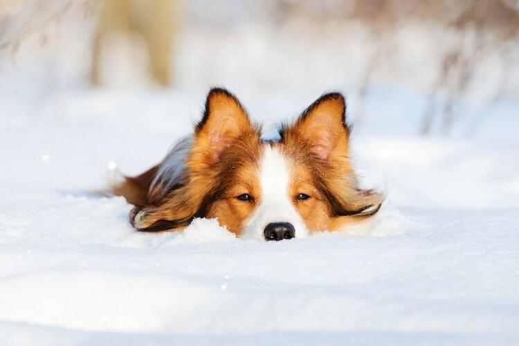 Hunde im Winterwunderland