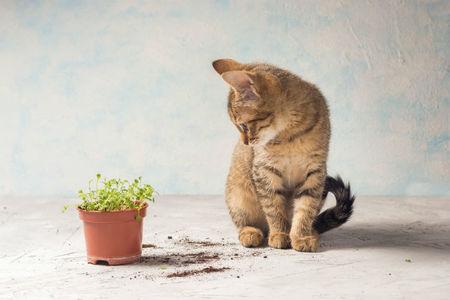 Gift für den Katzenmagen