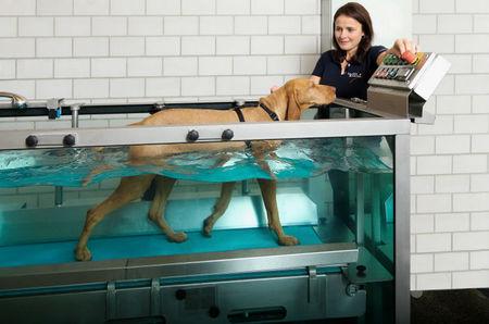 Tierbehandlung auf Top-Niveau