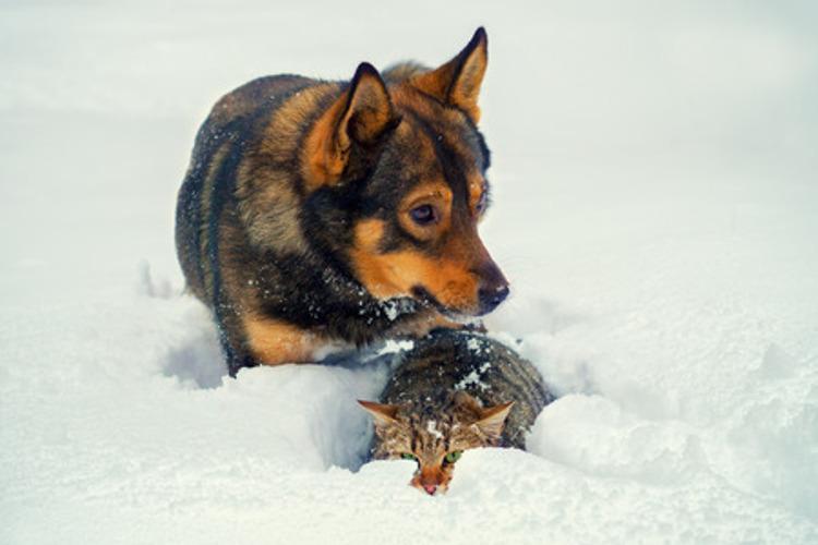 Haustiere im Winterwunderland