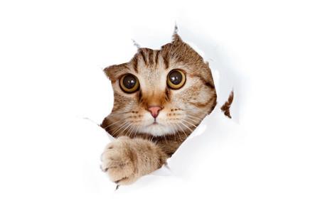 Wissenswertes für Katzenfreunde