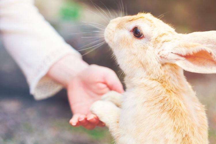 Besuch im Alters- und Pflegeheim für Tiere