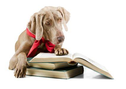 Wissenswertes für Hundefreunde