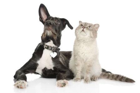 Tipps für die Tierbetreuung