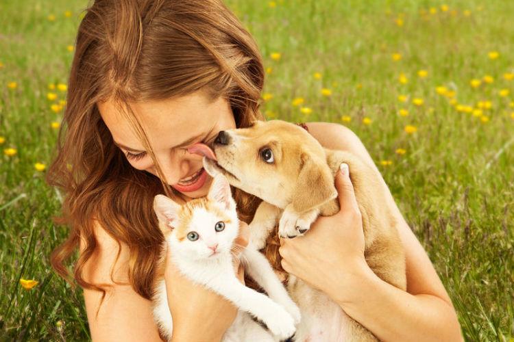 In 8 Schritten zum Wunsch-Petsitter