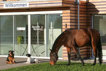 TierGesundheitsZentrum