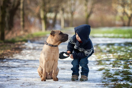 Hundesignale richtig deuten