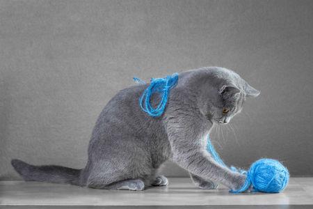 5 coole Accessoires für die Katz'