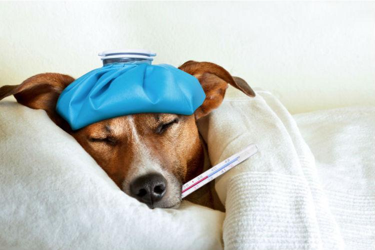 Erste-Hilfe-Kurs für Hunde
